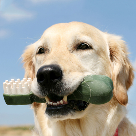 Dental Care - Queen Anne Animal Clinic