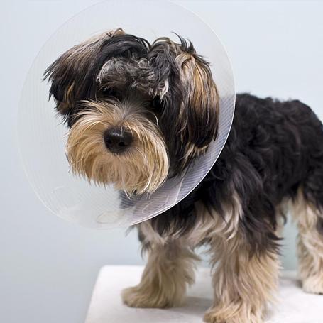 Spay & Neuter - Queen Anne Animal Clinic