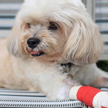 Pet Surgery - Queen Anne Animal Clinic
