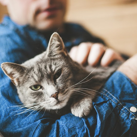 Preventative Care for Cats - Queen Anne Animal Clinic