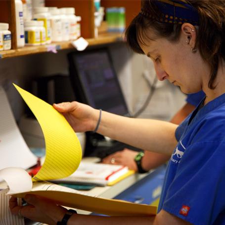 Lab Work - Queen Anne Animal Clinic