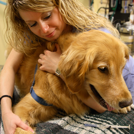Pain Management - Queen Anne Animal Clinic